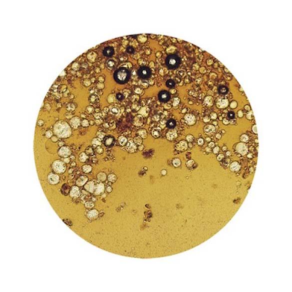 Δημοφιλή ροφήματα κάτω από το μικροσκόπιο (8)