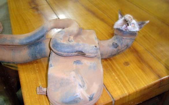 Επτάψυχη γάτα (1)
