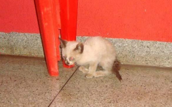 Επτάψυχη γάτα (2)