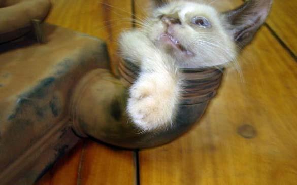 Επτάψυχη γάτα (3)