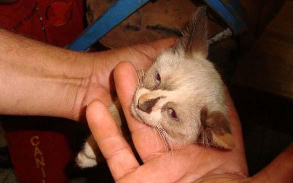 Επτάψυχη γάτα (9)