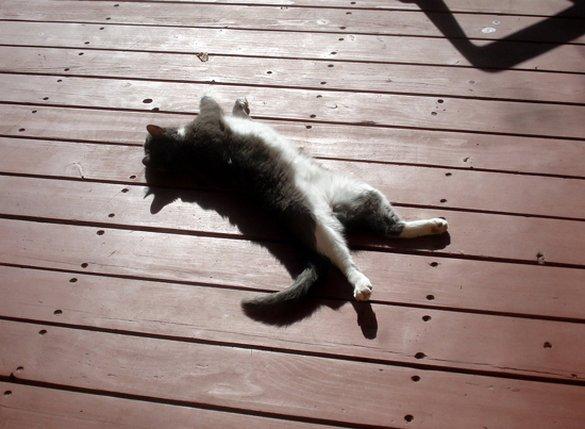 Γάτες που απολαμβάνουν πιο πολύ το καλοκαίρι απ' ότι εμείς (1)