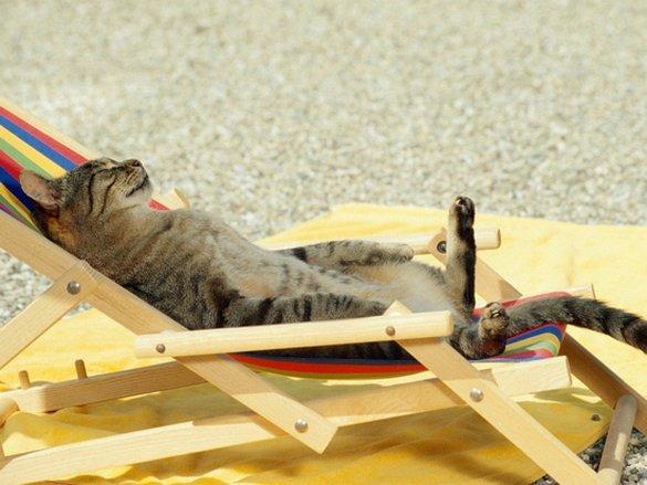 Γάτες που απολαμβάνουν πιο πολύ το καλοκαίρι απ' ότι εμείς (2)