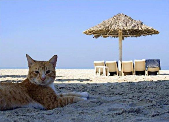 Γάτες που απολαμβάνουν πιο πολύ το καλοκαίρι απ' ότι εμείς (9)