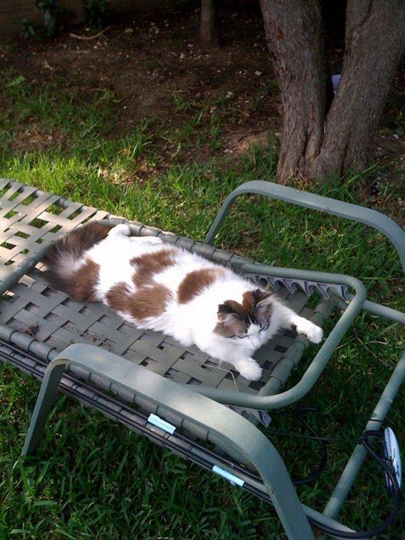 Γάτες που απολαμβάνουν πιο πολύ το καλοκαίρι απ' ότι εμείς (10)