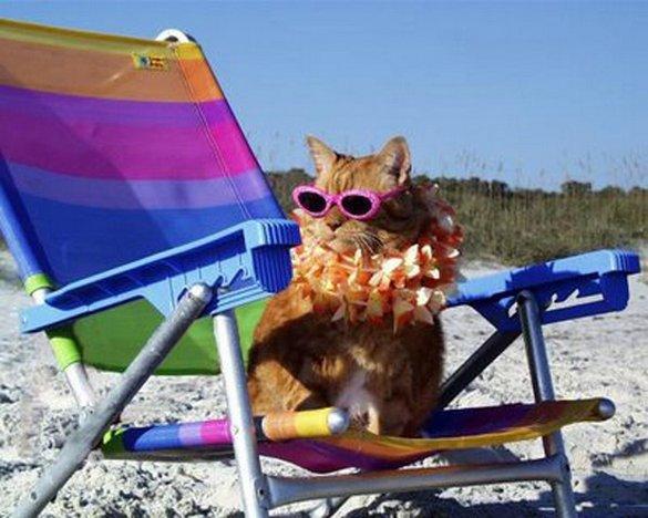 Γάτες που απολαμβάνουν πιο πολύ το καλοκαίρι απ' ότι εμείς (11)