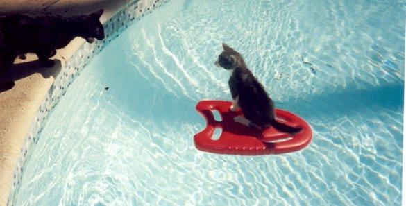 Γάτες που απολαμβάνουν πιο πολύ το καλοκαίρι απ' ότι εμείς (13)