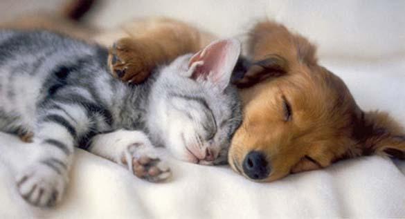 Γάτες & σκύλοι που κοιμούνται μαζί (1)