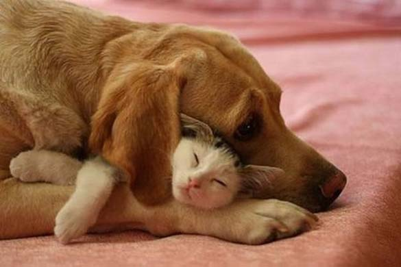 Γάτες & σκύλοι που κοιμούνται μαζί (2)
