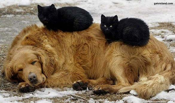 Γάτες & σκύλοι που κοιμούνται μαζί (4)