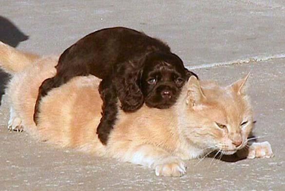 Γάτες & σκύλοι που κοιμούνται μαζί (5)