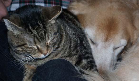 Γάτες & σκύλοι που κοιμούνται μαζί (8)