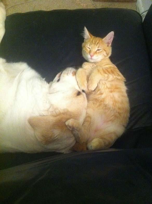 Γάτες & σκύλοι που κοιμούνται μαζί (9)