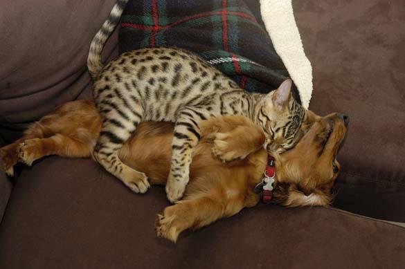 Γάτες & σκύλοι που κοιμούνται μαζί (11)