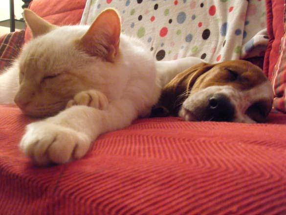 Γάτες & σκύλοι που κοιμούνται μαζί (12)