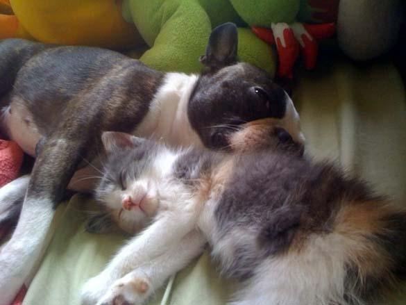 Γάτες & σκύλοι που κοιμούνται μαζί (13)