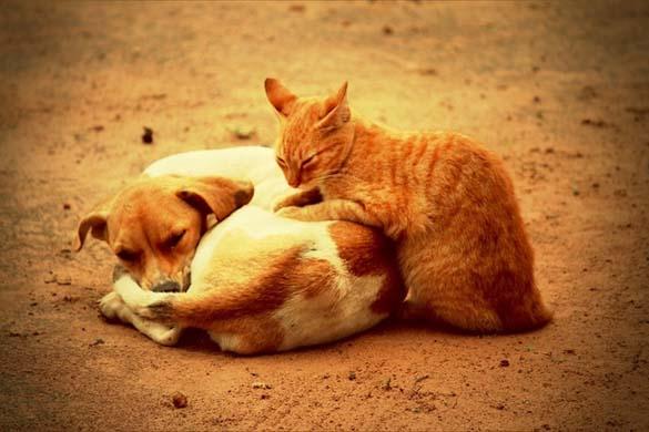 Γάτες & σκύλοι που κοιμούνται μαζί (14)