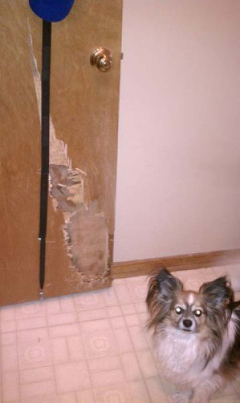 Όταν τα κατοικίδια έχουν καταστροφικές διαθέσεις (7)