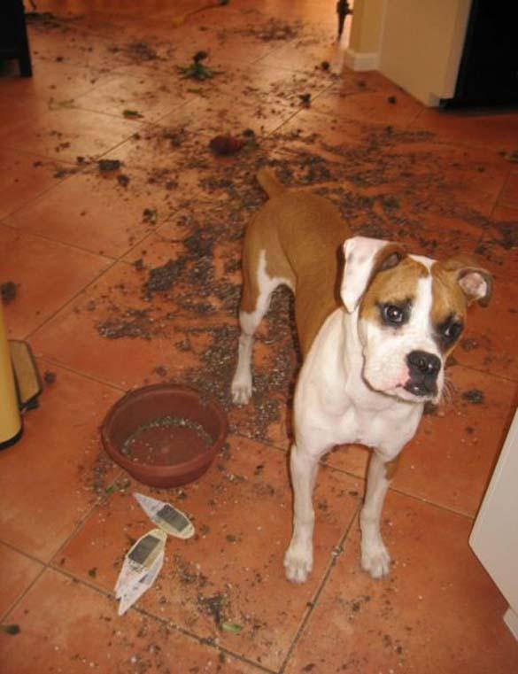 Όταν τα κατοικίδια έχουν καταστροφικές διαθέσεις (10)