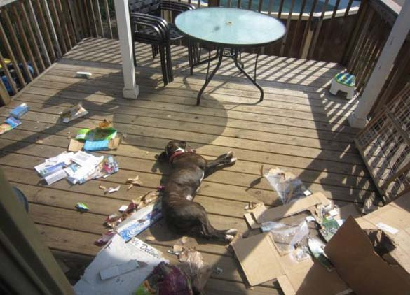 Όταν τα κατοικίδια έχουν καταστροφικές διαθέσεις (15)