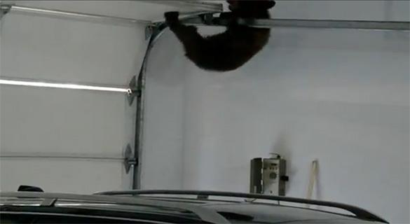 Μαμά αρκούδα ανοίγει γκαράζ για να σώσει το αρκουδάκι της