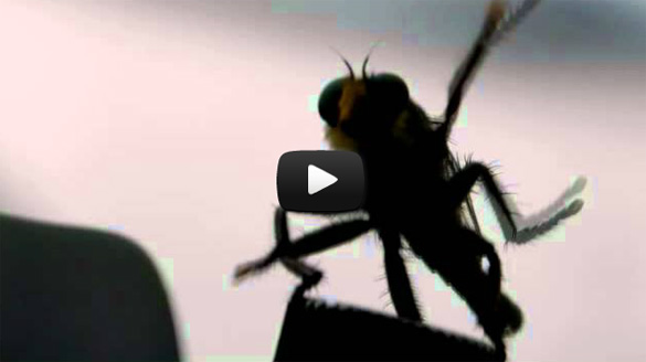 Μύγα κάνει χορευτικές κινήσεις πάνω σε τηλεσκόπιο