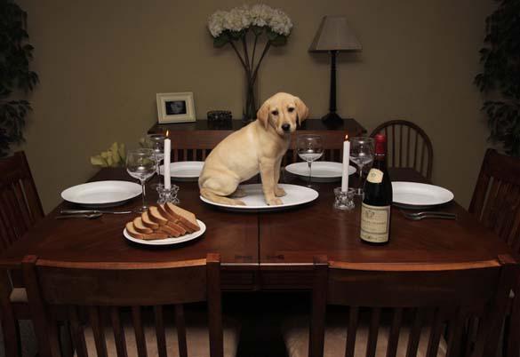 Περιμένοντας το φαγητό (2)