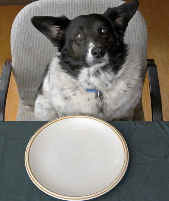 Περιμένοντας το φαγητό (6)