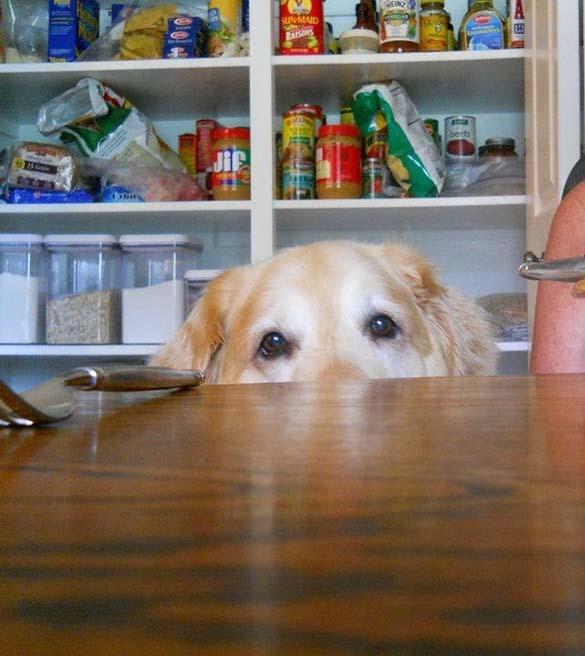 Περιμένοντας το φαγητό (9)