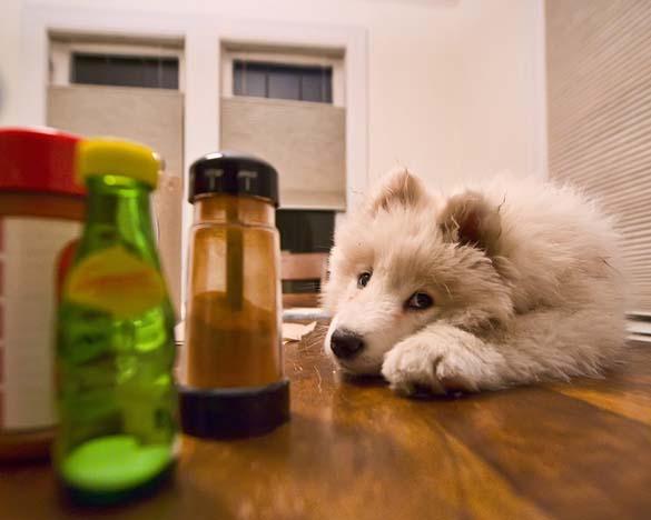 Περιμένοντας το φαγητό (11)