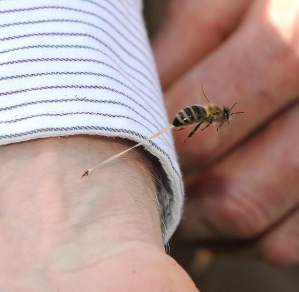 Το τσίμπημα της μέλισσας | Φωτογραφία της ημέρας