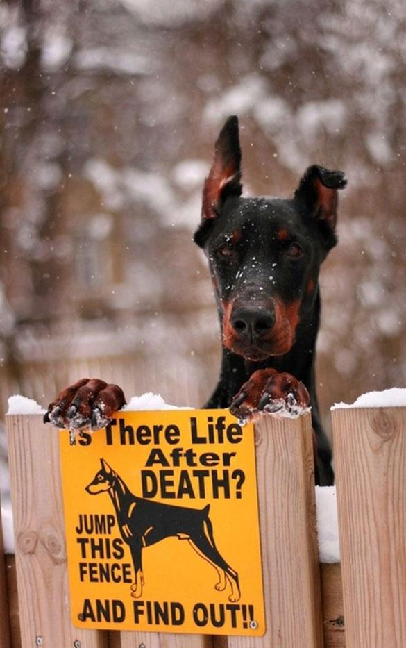 Υπάρχει ζωή μετά θάνατον; | Φωτογραφία της ημέρας