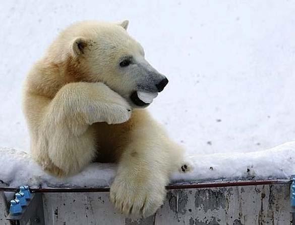 Τα πιο... Fabulous ζώα στο ζωικό βασίλειο (2)