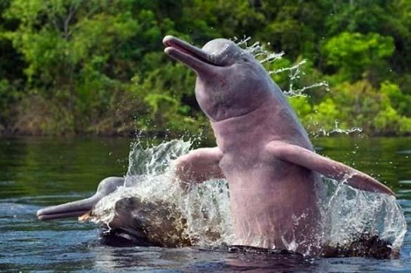 Τα πιο... Fabulous ζώα στο ζωικό βασίλειο (7)