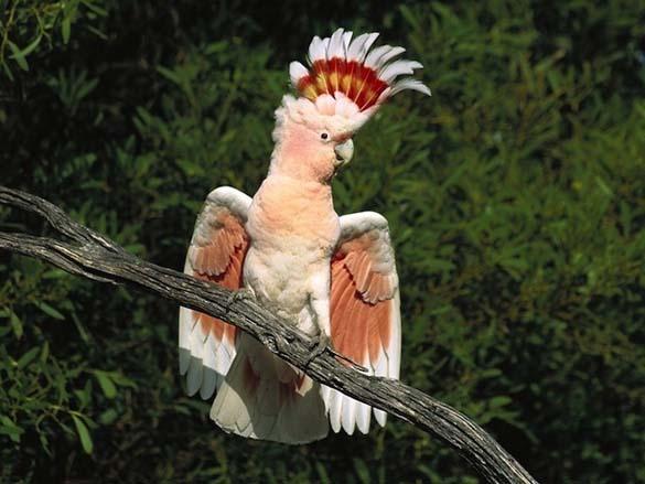Τα πιο... Fabulous ζώα στο ζωικό βασίλειο (14)