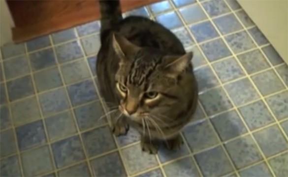 Η πιο υπάκουη γάτα στον κόσμο