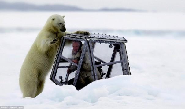 Πως είναι να σε στριμώχνει μια πεινασμένη πολική αρκούδα