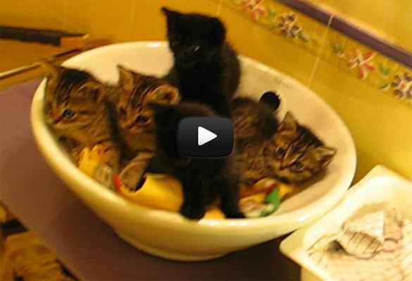 Συγχρονισμένα γατάκια