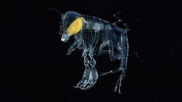 25 από τα πιο τρομακτικά πλάσματα του βυθού (1)