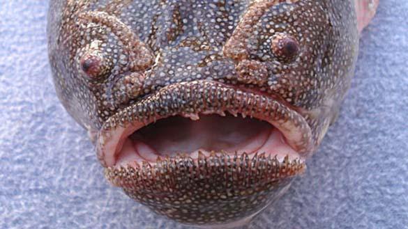 25 από τα πιο τρομακτικά πλάσματα του βυθού (9)