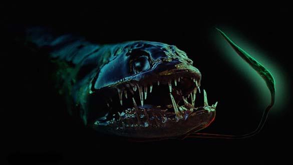 25 από τα πιο τρομακτικά πλάσματα του βυθού (10)