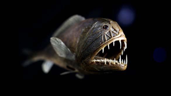 25 από τα πιο τρομακτικά πλάσματα του βυθού (12)