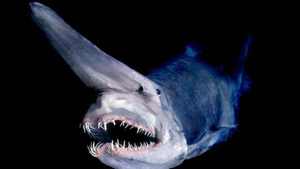 25 από τα πιο τρομακτικά πλάσματα του βυθού (16)