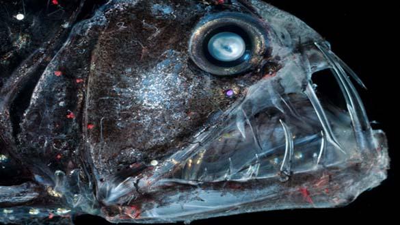 25 από τα πιο τρομακτικά πλάσματα του βυθού (25)