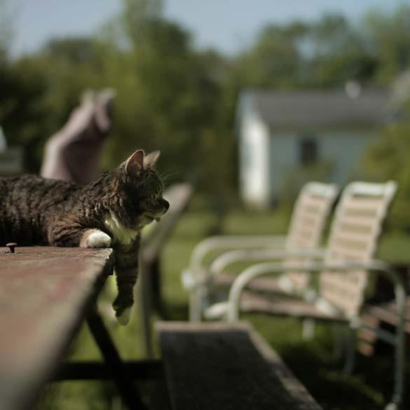 Το γατάκι νάνος που τρελαίνει το Internet (15)