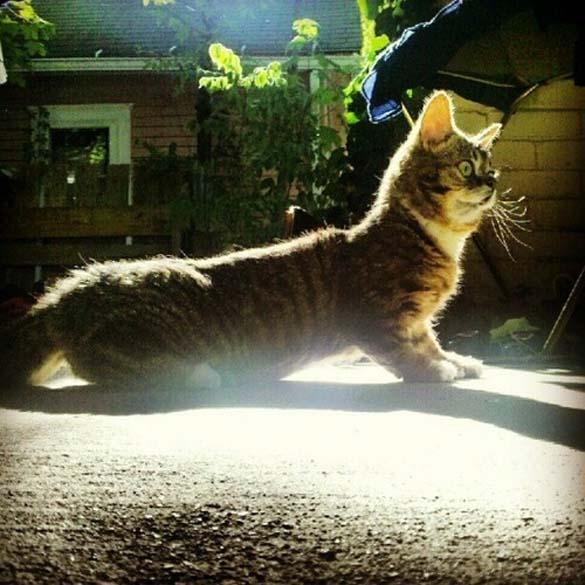 Το γατάκι νάνος που τρελαίνει το Internet (18)