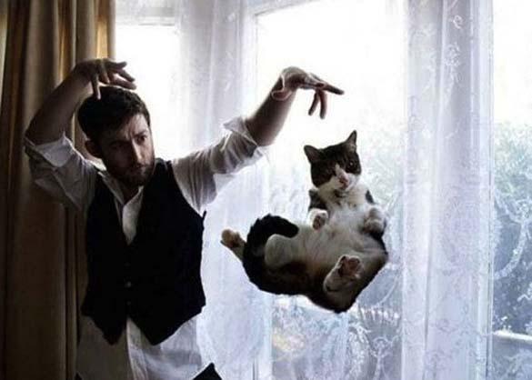 Γάτες που φωτογραφήθηκαν την κατάλληλη στιγμή (2)