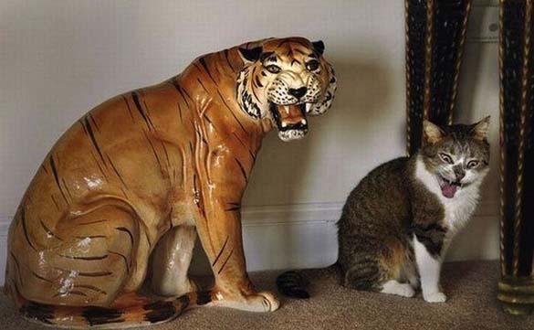 Γάτες που φωτογραφήθηκαν την κατάλληλη στιγμή (3)