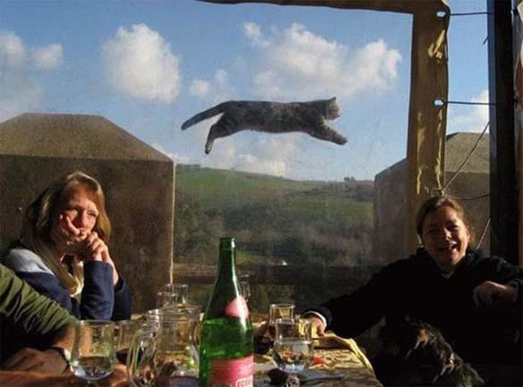 Γάτες που φωτογραφήθηκαν την κατάλληλη στιγμή (4)