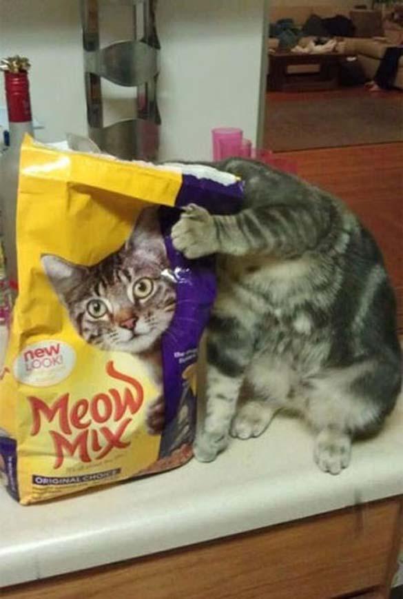 Γάτες που φωτογραφήθηκαν την κατάλληλη στιγμή (6)